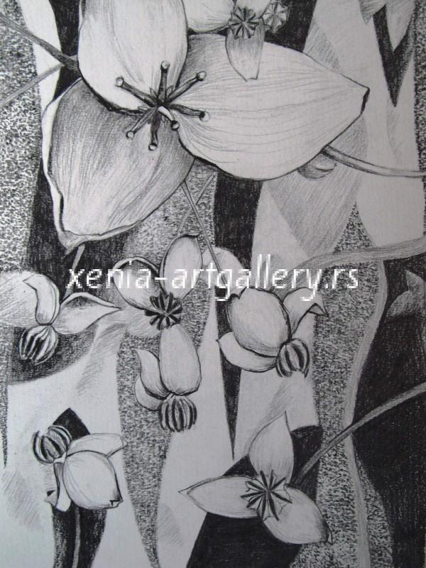 1 Akebia, grafitna olovka, papir 18x23,5 cm
