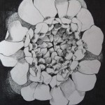 10 Iberis, grafitna olovka, papir 18x23,5 cm