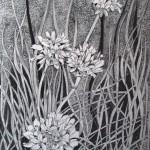11 Armeria, grafitna olovka, papir 18x23,5 cm