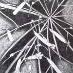 18 Russelia equisetiformis, grafitna olovka, papir 18x23,5 cm