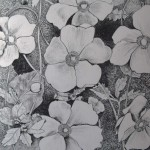 3 Anemone, grafitna olovka, papir 18x23,5 cm