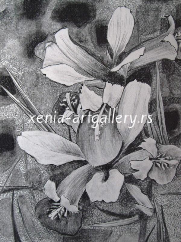 4 Iris, grafitna olovka, papir 18x23,5 cm