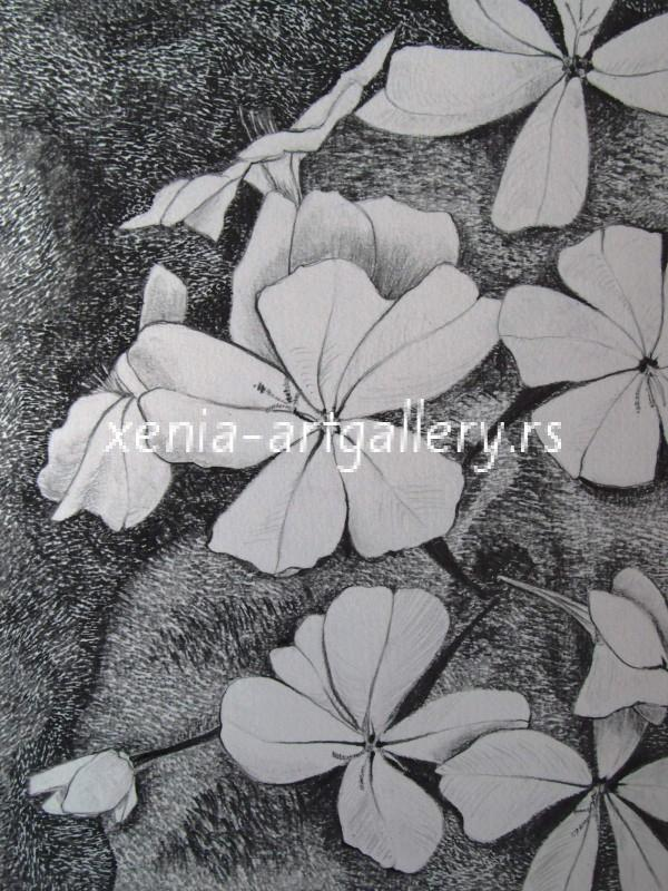 9 Plumbago, grafitna olovka, papir 18x23,5 cm