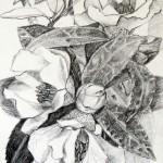 Camelia, grafitna olovka, papir 21x15 cm