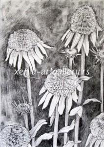 Echinacea,Drawing,pencil,paper 21x15cm