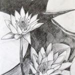 Lotos, grafitna olovka, papir 21x15 cm